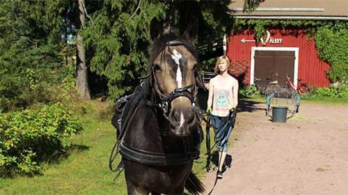 Hevosen koulutusta ja opetusta, Harjavalta - Eläinkouluttaja - Hevoskouluttaja