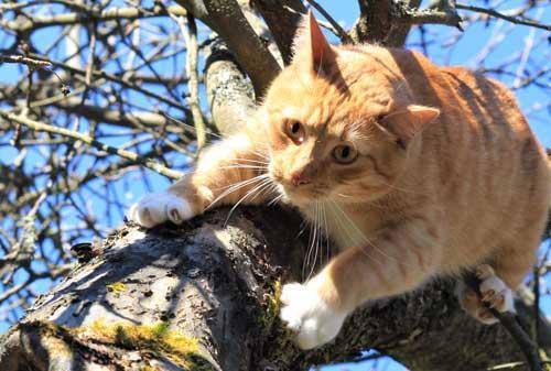 Kissan koulutus, kissan virikkeet, Eläinkoulu Välkky, Harjavalta
