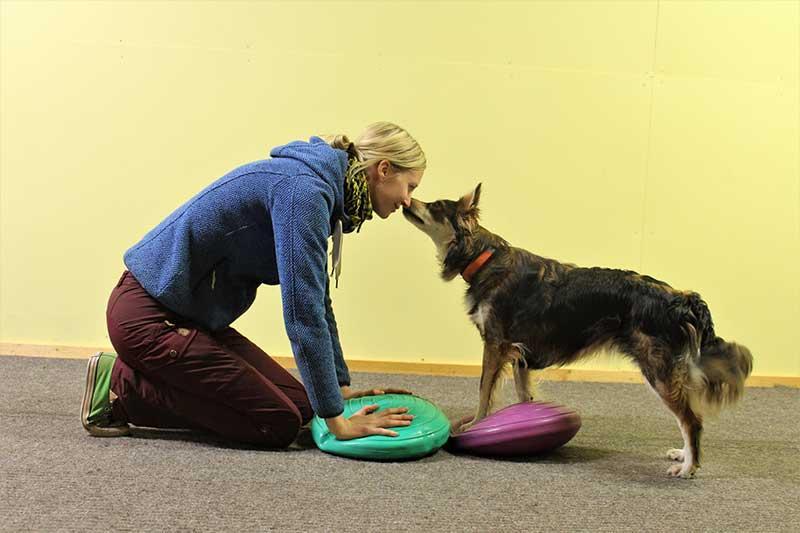 Opi matkimalla! Kurssilla opetetaan koiralle matkimisen idean Claudia Fugazzan kehittämän Do as I do-menetelmän avulla. Matkiminen on hauska ja hyödyllinen taito ja voit hyödyntää sitä uusien käytösten opettamisessa.